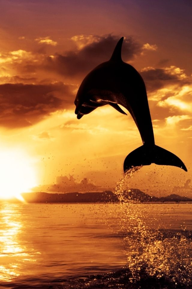 Cute Dolphin Wallpapers 640x960 Popular Mobile Wallpapers Free Download 2