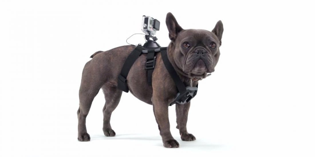 GoPro Fetch Wearables for Pets