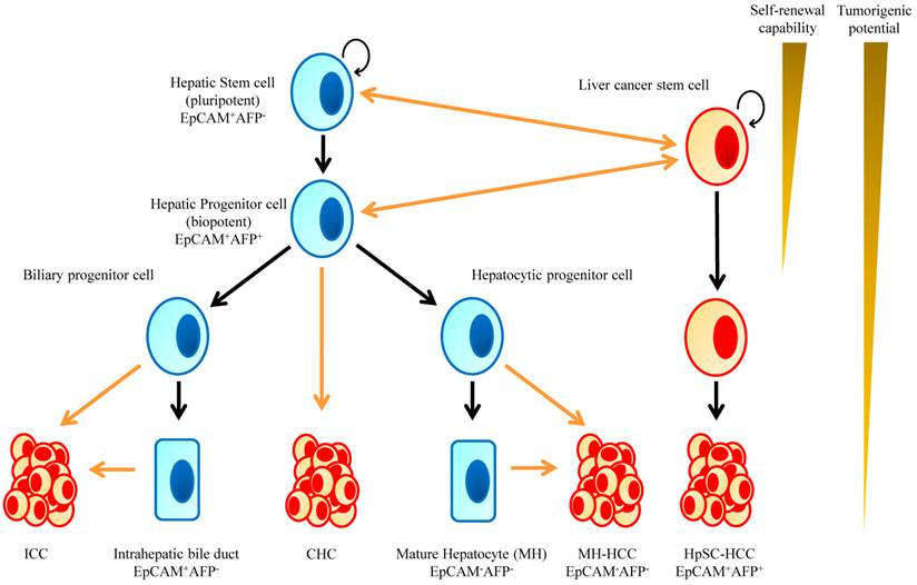 Novel Therapeutic Strategies For Targeting Liver Cancer