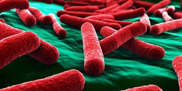 Tumori - Inventato il batterio autodistruttivo