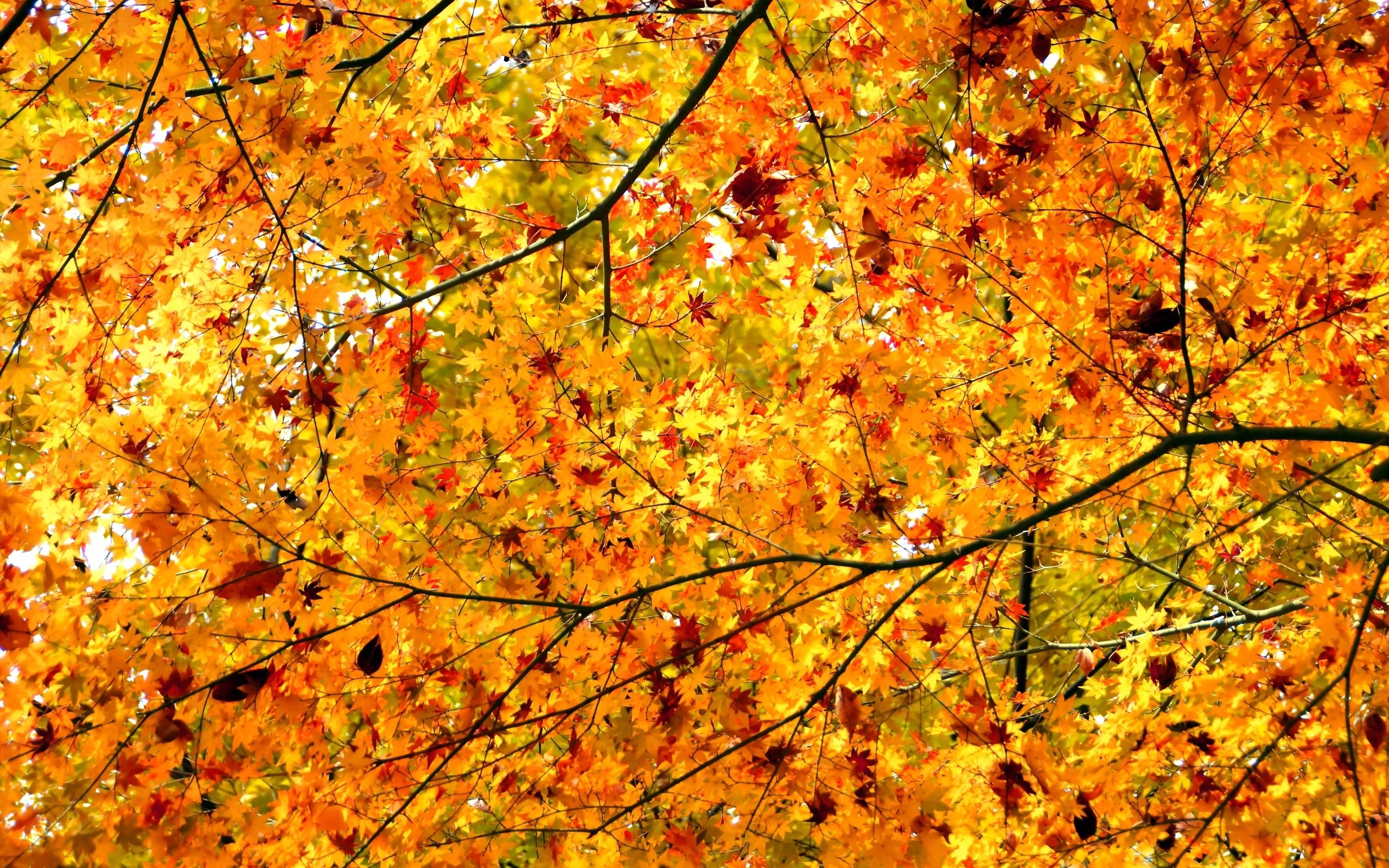 Download Cool Quotes Wallpapers Daily Wallpaper Autumn Maple Trees I Like To Waste My Time