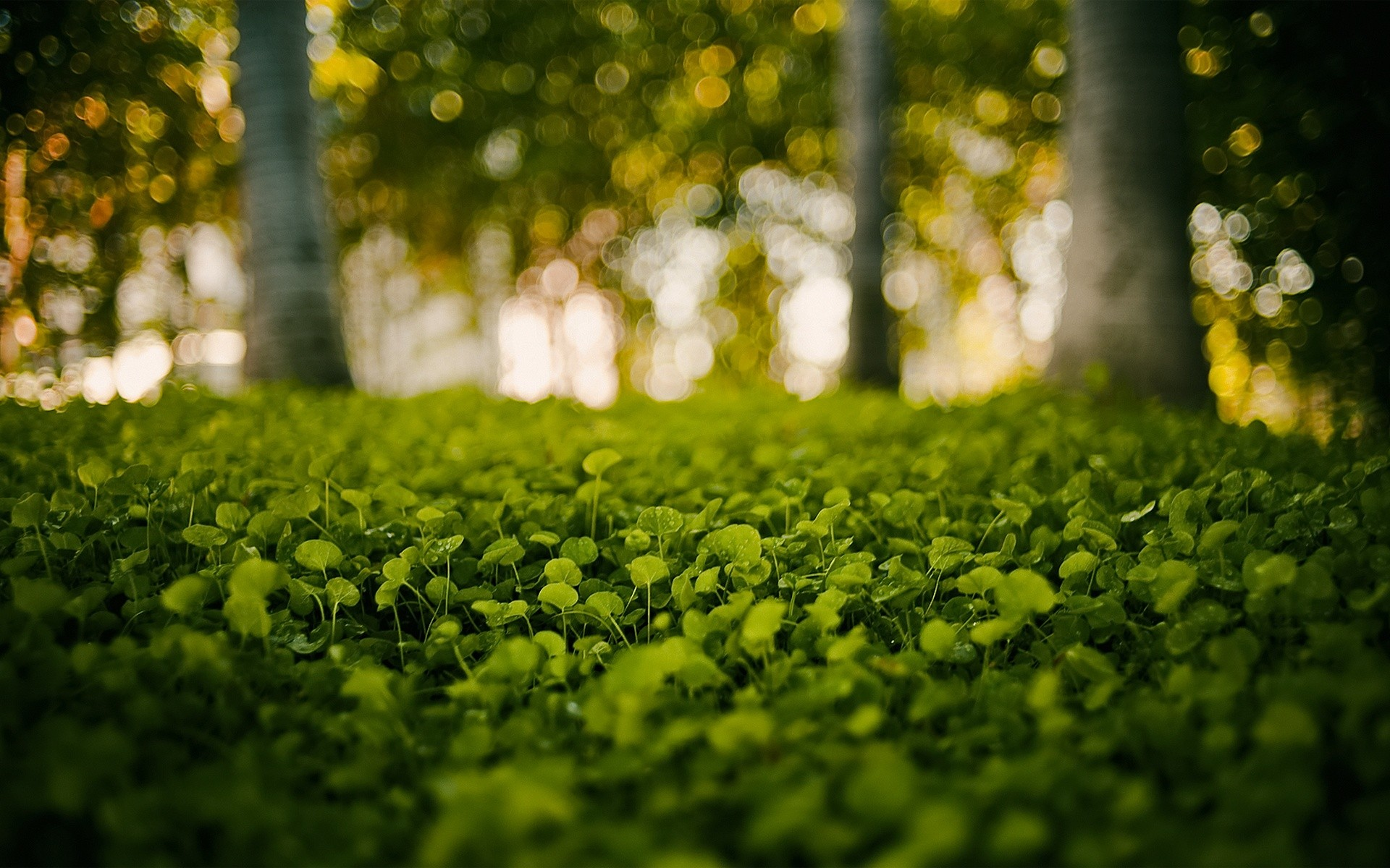 Short Cool Quotes Wallpaper Daily Wallpaper Green Forest I Like To Waste My Time