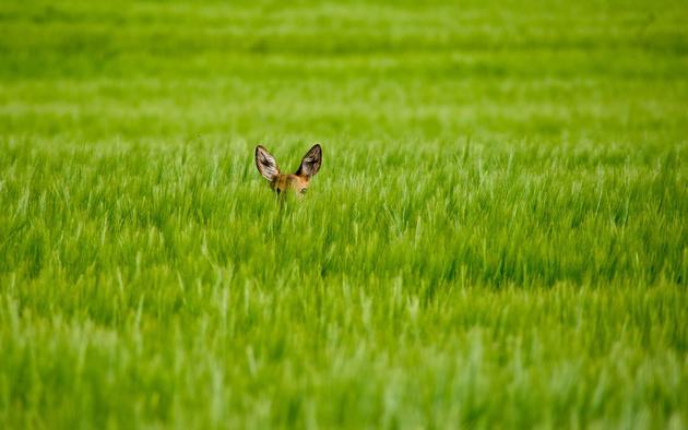 Animal Pak Wallpaper Daily Wallpaper Shy Bambi I Like To Waste My Time