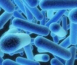 Penyakit Mematikan Legionnaire
