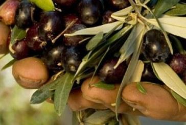 Dalla Puglia a Cupello per raccogliere le olive: migranti pagati 3 euro l'ora, due arresti