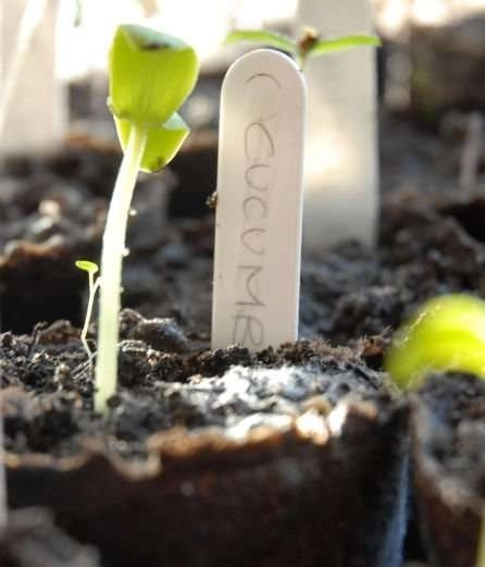 Ten Best Articles on Starting From Seed