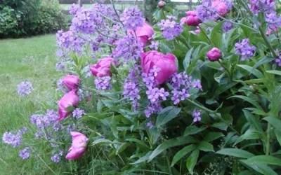 Monochromatic Gardens