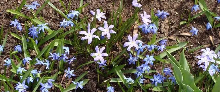 5 Choice Small Bulbs for a Spring Garden