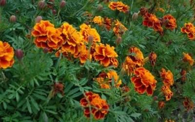 Easy Garden Seeds For A Child's Garden