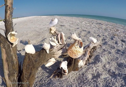 Seashell Wish Tree Sanibel