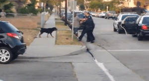 police shoot dog