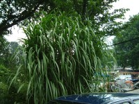 Image*After : photos : maartent plant bush shrub bamboo