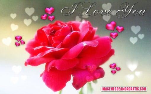 Imágenes de amor con rosas y corazones I Love You - rosas y corazones