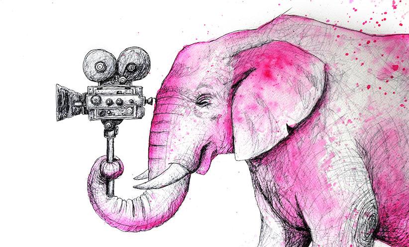 elephant-camera-cropped