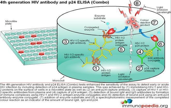 Hiv P24 Antigen Diagram Wiring Diagram 2019