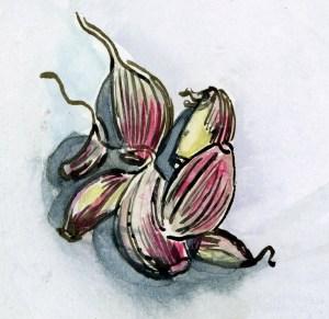 garlic002