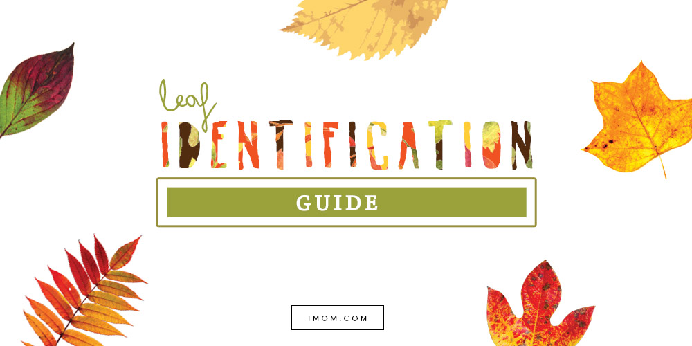 New Leaf Identification Chart chartlisticili