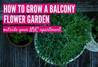 How to Grow a Balcony Flower Garden Outside Your NYC Apartment