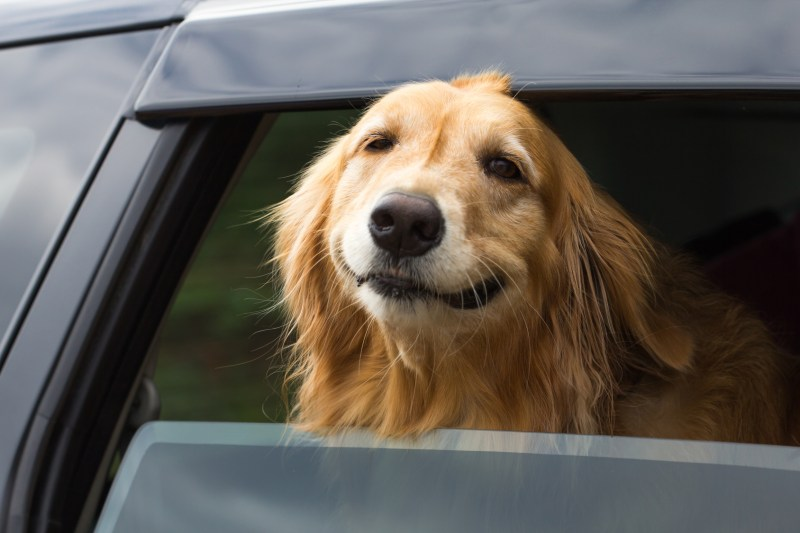 Large Of Do Dogs Smile