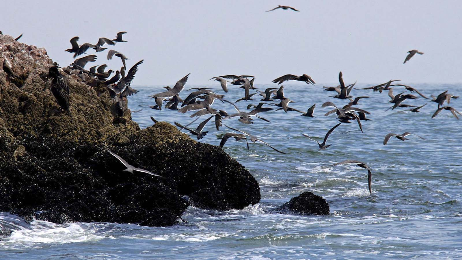 Daily Wallpaper Quote Ballestas Islands And Paracas Reserve Full Day Tour Inca