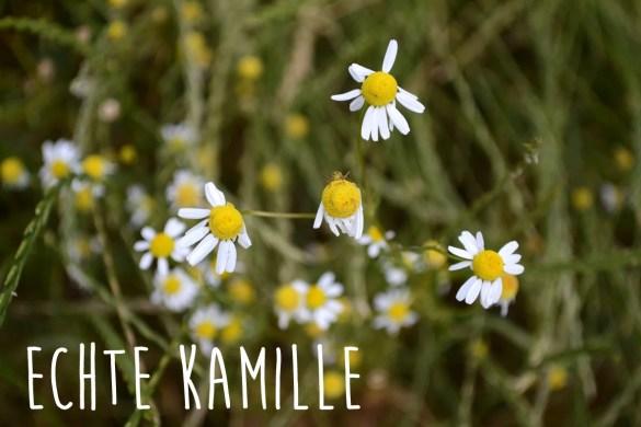 echte_kamille