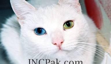 heterochromia iridis
