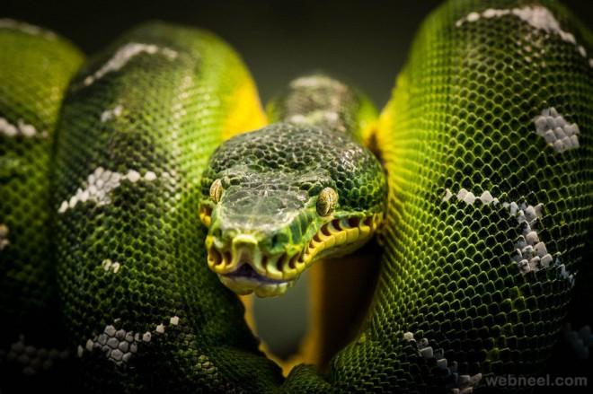 3d Snake Wallpaper Hd Stunning Examples Of Award Winning Wildlife Photography