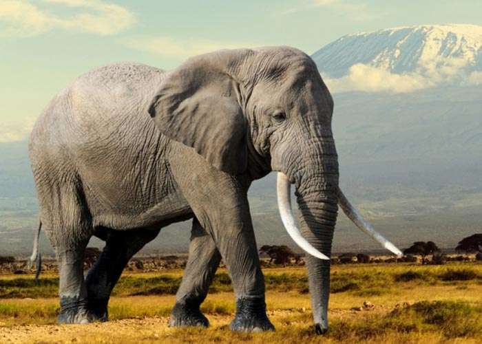 Jungle Wallpaper With Animals Essay On Elephant For Children And Students