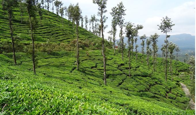 Post tea auction operations hampered, says tea producers