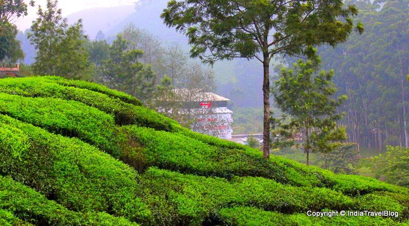 Nature Wallpaper Hd 3d Natural Beauty Of Munnar