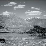 Nubra (Ladakh, India). Foto di Luca Buonaguidi