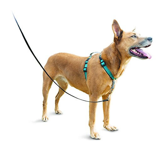 Easy Walk Dog Harness Best - Wiring Diagram Services \u2022