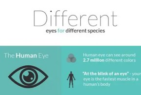 eyes-infographic