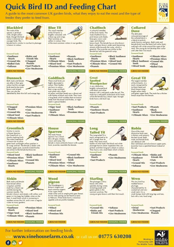 Infographic: A Quick Guide to Bird Feeding