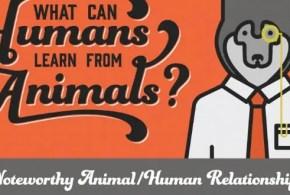 humans-vs-animals