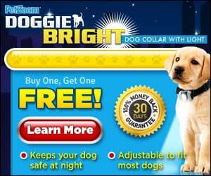 doggie bright collar with light
