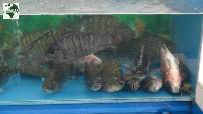 Sørgelig behandling dyr, og disse sælges tilmed som værende friske fisk... :-(
