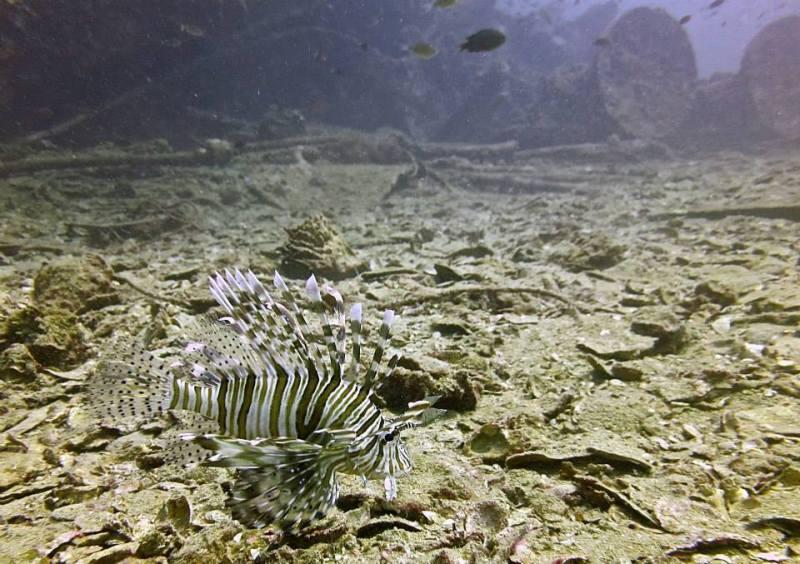 Similan islands, richelieu rock, koh tachai, koh bon, thailand, dykning, liveaboard, Khaolakscubaadventures, lionfish