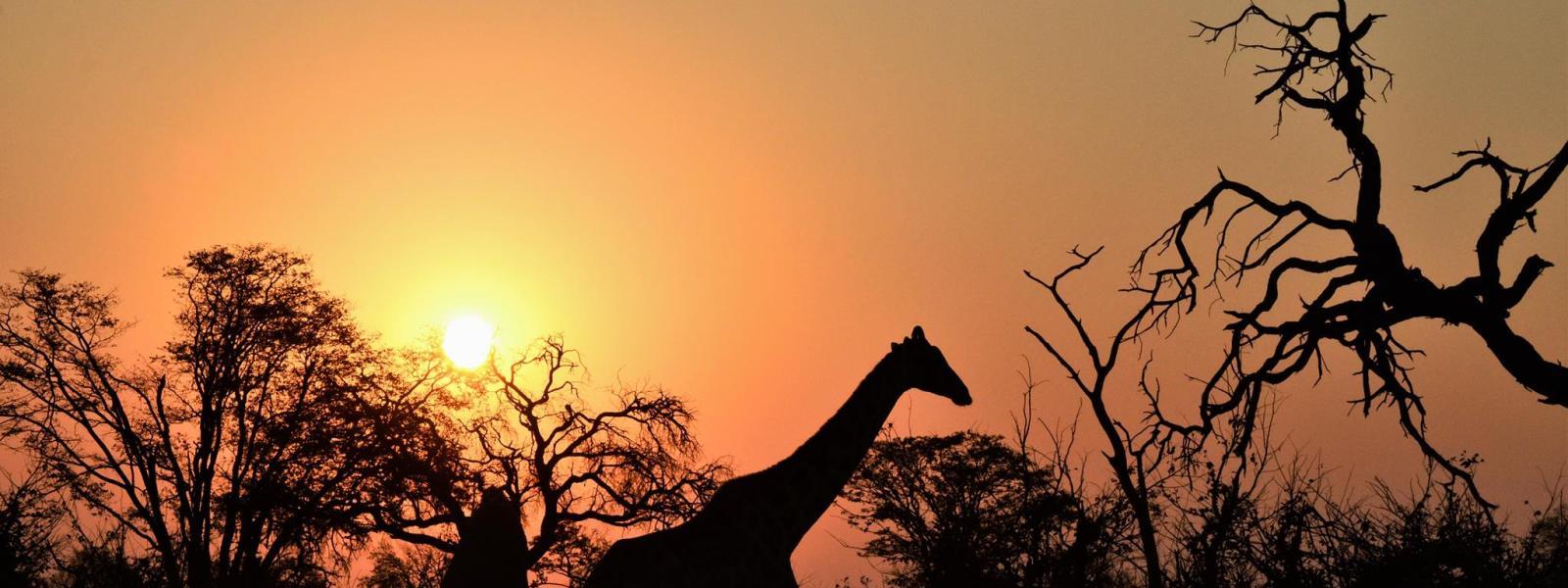 Botswana – Den ultimative safari oplevelse!