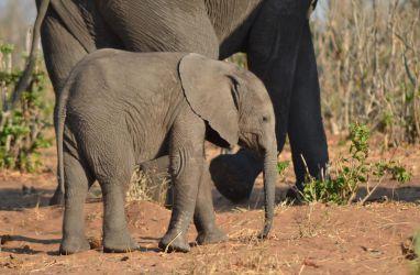 1. Chobe National Park (114)