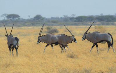 6. Central Kalahari Game Reserve (74)
