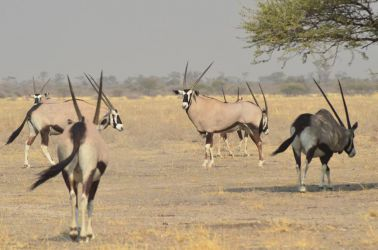 6. Central Kalahari Game Reserve (65)