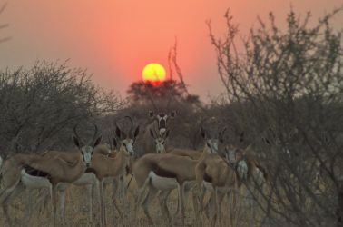 6. Central Kalahari Game Reserve (158)