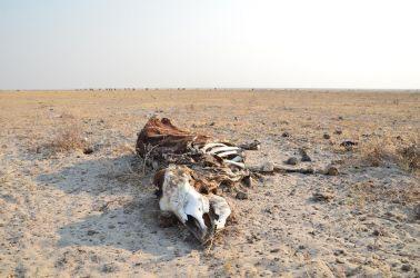7. Makgagikgadi National Park 1 (29)