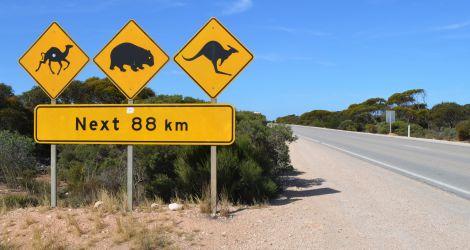 Australien, emu, kænguru, roos, wombat, sign, skilt, vildt