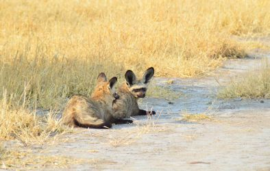 6. Central Kalahari Game Reserve (127)