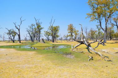 4. Moremi Game Reserve 1 (7)