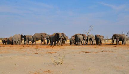1. Chobe National Park 1 (11)