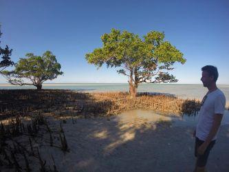 Erik beundre mangrove træerne