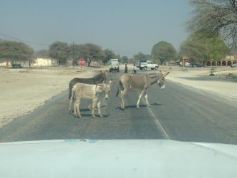 7. Makgagikgadi National Park 1 (42)